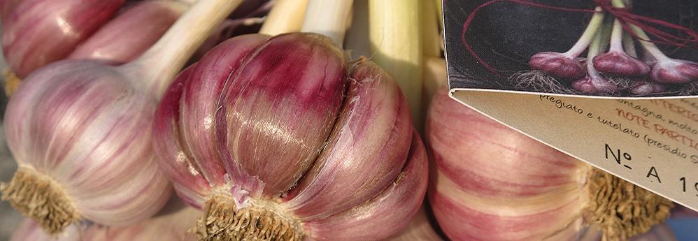prodotti tipici friulani aglio di resia